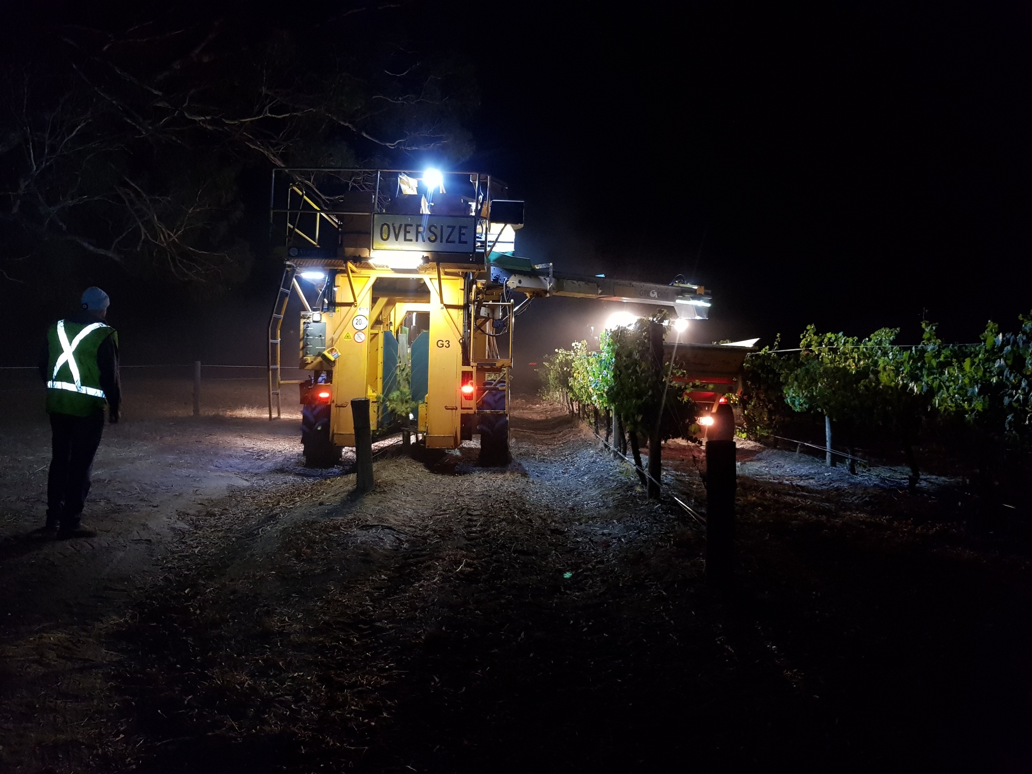 Night harvesting Chardonnay